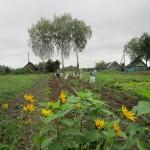 0.  монастырский участок. Первый урожай монастырской картошки.