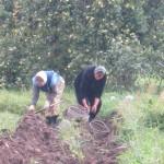 2. монастырский участок. Первый урожай монастырской картошки.