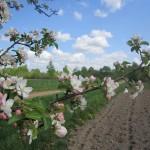 Посадка картошки в Слободе (3)