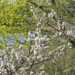 Весна в Тадулинском монастыре (9)